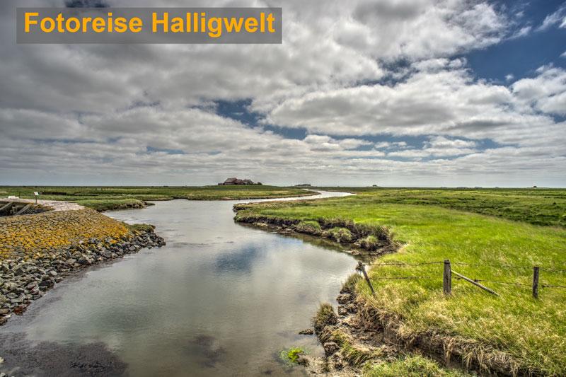 Halligwelt